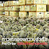 """ฝ่าวิกฤติโควิด""""เกษตรฯ.""""ชูธง """"5 ยุทธศาสตร์เฉลิมชัย"""" ใช้แพลตฟอร์มรูปแบบใหม่ระบบสั่งซื้อล่วงหน้าออนไลน์เจาะตลาดจีน 1,400 ล้านคน พร้อมกลยุทธ์สร้างแบรนด์ทุเรียนไทยสำเร็จเป็นครั้งแรก"""
