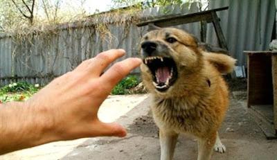 köpeklere kollarınızı sallamayın