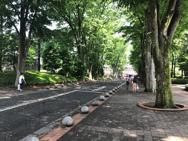 イメージ画像:緑の道