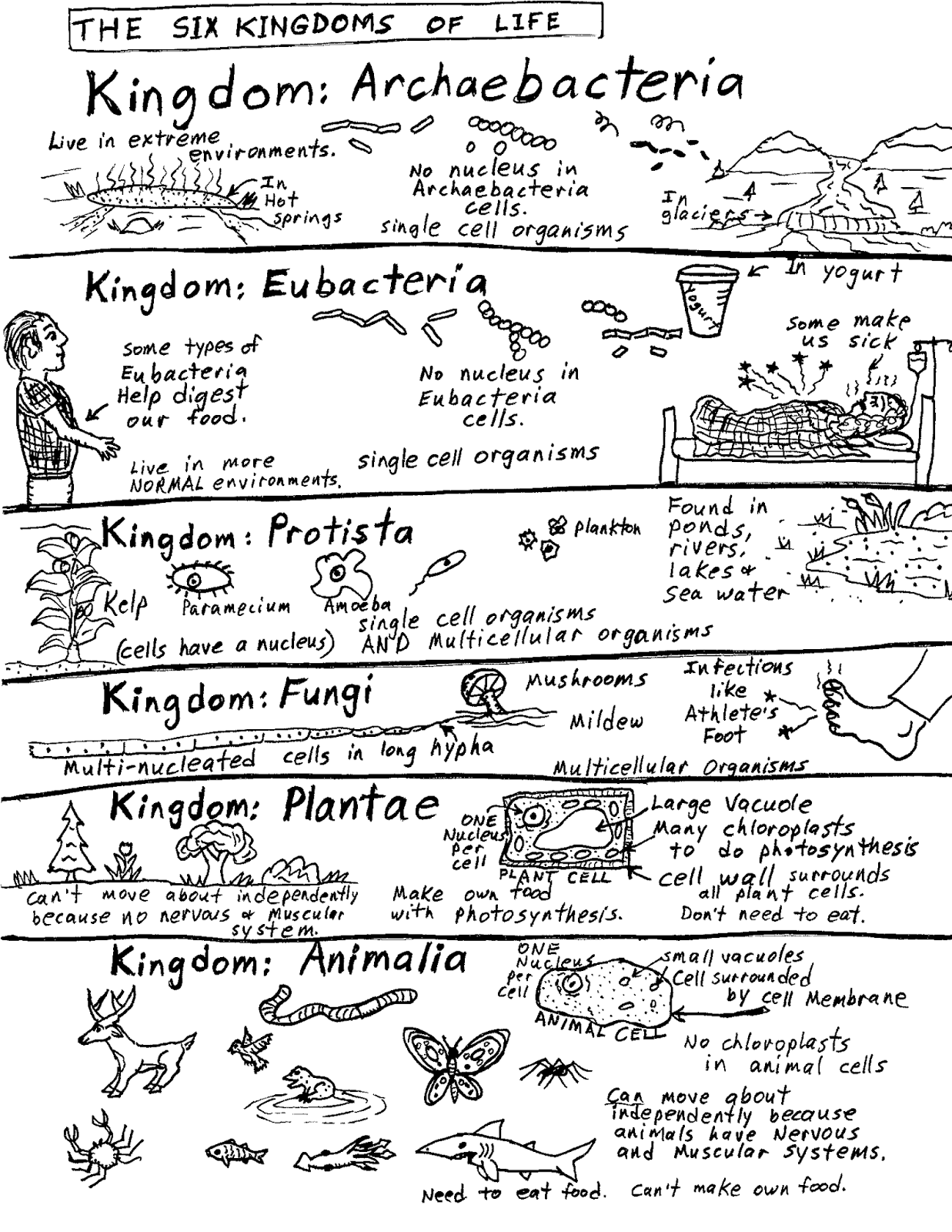 Robin's Great Coloring Pages: Six Kingdoms of Life