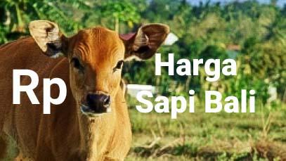 Bali Cattle Image