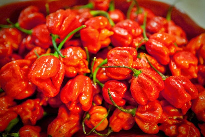 http://www.telegraph.co.uk/gardening/grow-to-eat/hot-stuff-top-10-chillies-in-order-of-heat/