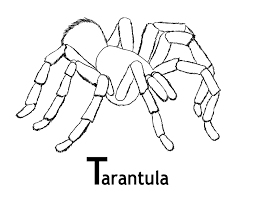 Best Image And Photo Of Tarantula Sheet For Print