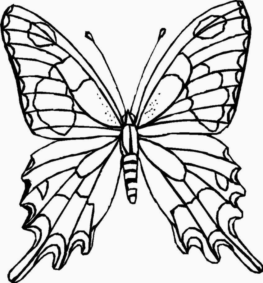 16 butterfly coloring pages  Printable and Colors