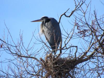 Lower Klamath National Wildlife Refuge northern California auto tour