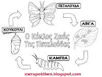 Αποτέλεσμα εικόνας για Ο κύκλος ζωής της πεταλούδας