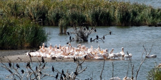 marmarada gezilecek yerler manyas kuş gölü