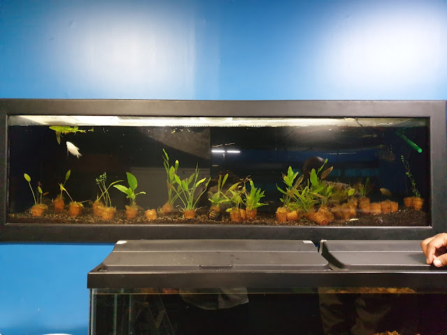 Aquascaping Shops for Live Aquatic Plants in Saudi Arabia ...