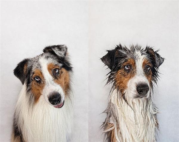 """Chùm ảnh """"không thể không nhịn cười"""" của chó"""