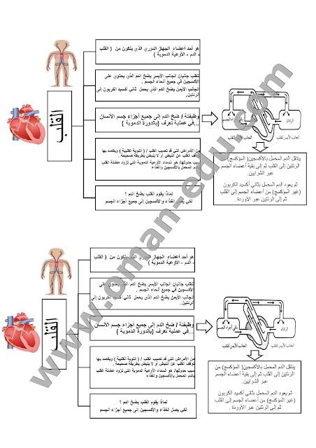 ملخص وشرح درس القلب - جسم الإنسان الصف السادس