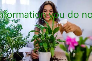Information you do not know about dangerous and useful plants in your home