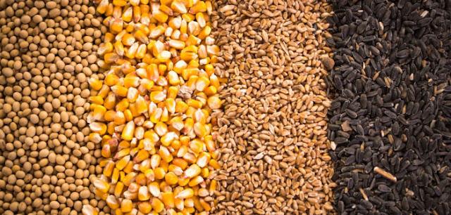 thị trường ngũ cốc