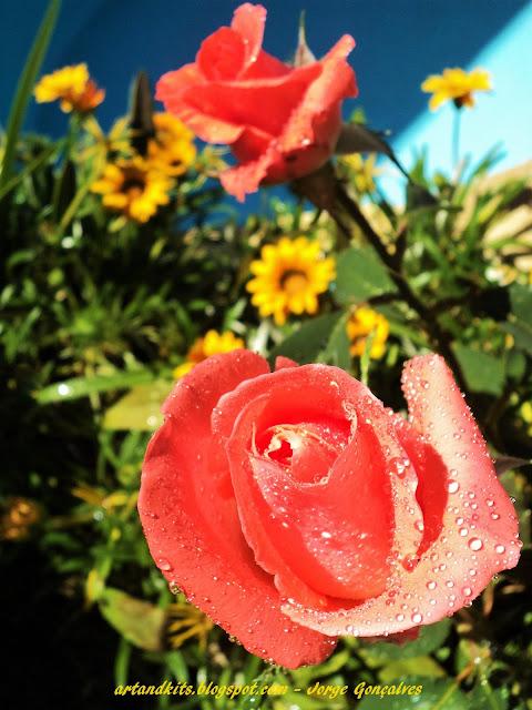 E agora que, após tanto tempo parado, deixámos aqui uns dias, o nosso blog a arejar... a nossa próxima tarefa será... do nosso jardim cuidar!... Começarei aos poucos a visitar os vossos espaços, nos próximos dias... / And now, that we have left here a few days, our blog airing a bit, after so long stopped... our next task will be... take good care of our garden!... I will slowly start visiting your blogs in the coming days...
