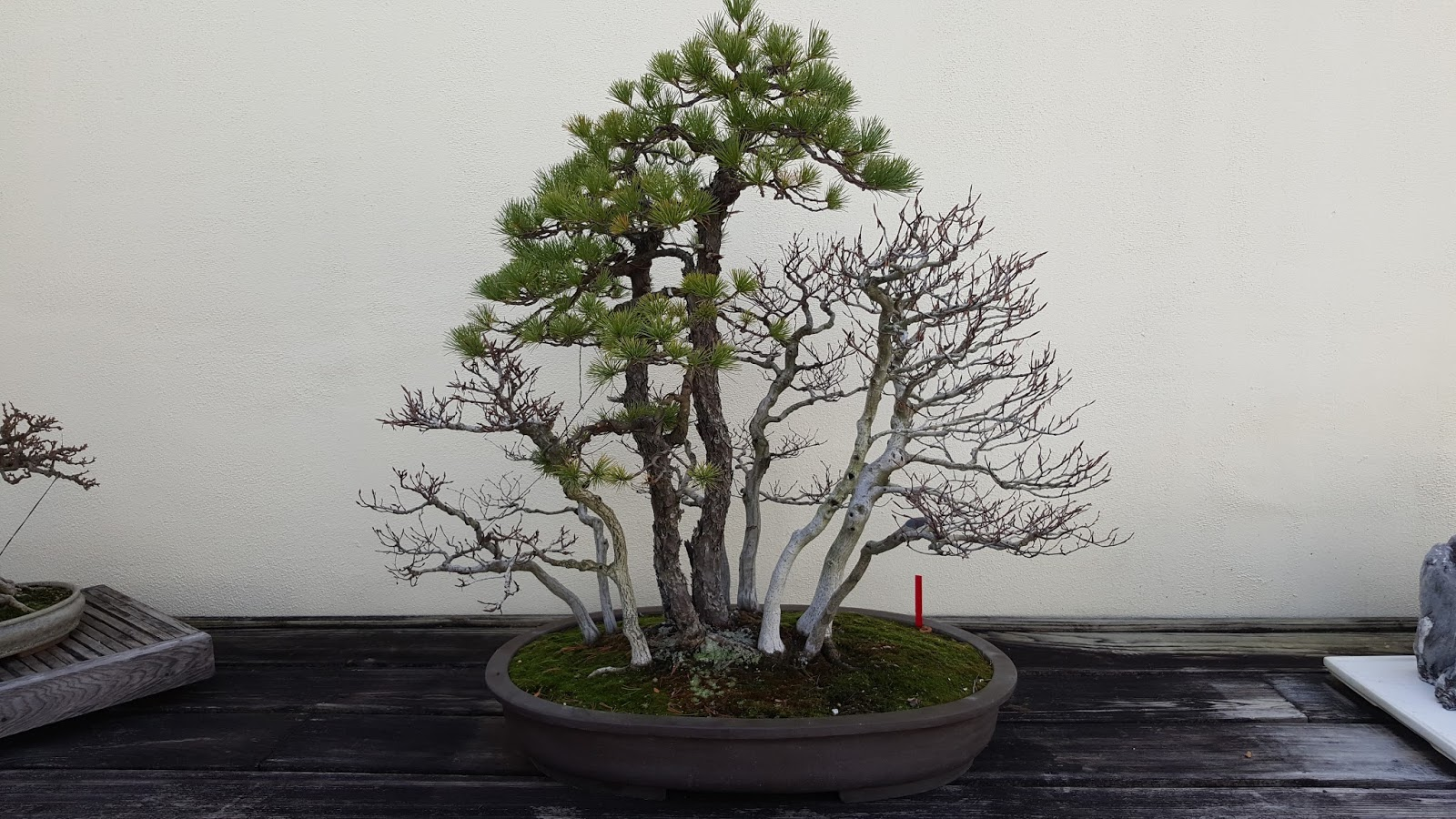 Bonsai Misadventures February 2016