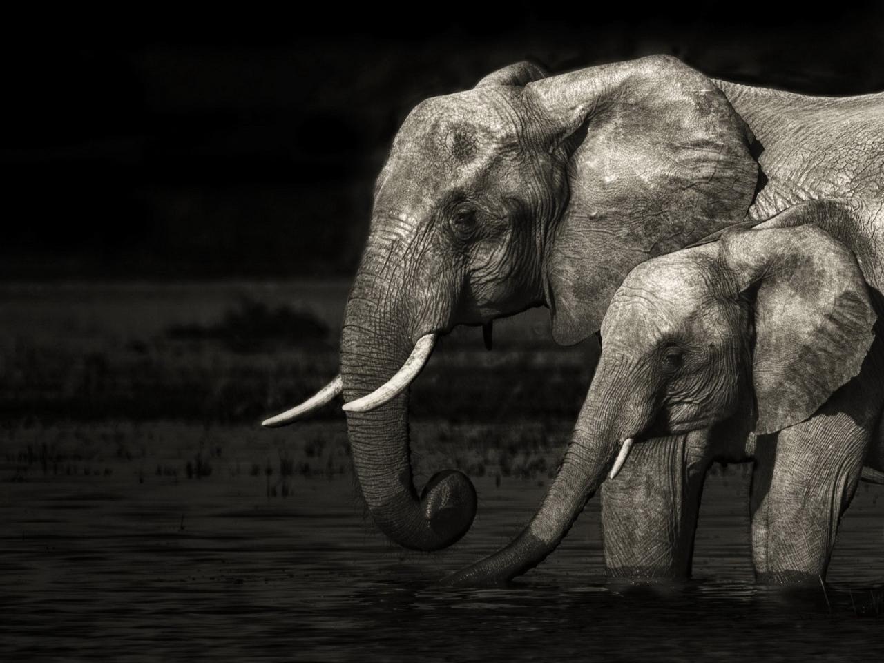 Fond d 39 cran l phant indien fonds d 39 cran hd - Elephant indien dessin ...