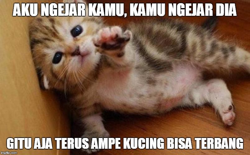 Download 61+  Gambar Kucing Lucu Kata2 Terbaik Gratis