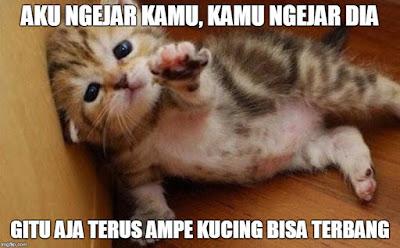 13 Meme 'Kucing' Ini Lucu Banget Bikin Gemes Campur Ngakak