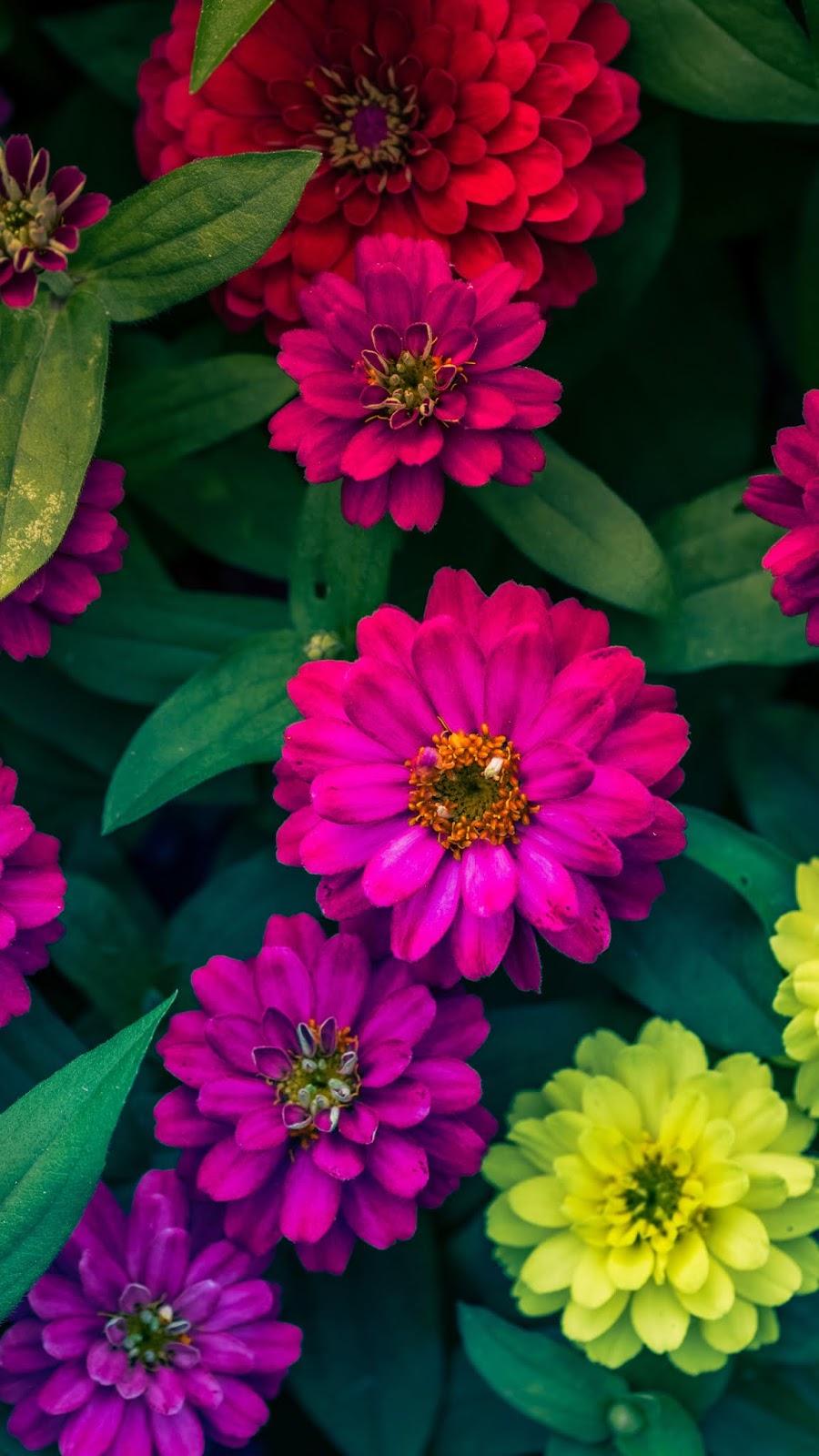 Những bông hoa đầy màu sắc