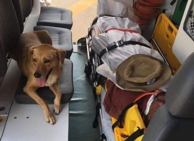 DF: Cadela entra em ambulância acompanhando morador de rua e se recusa a deixa-lo sozinho