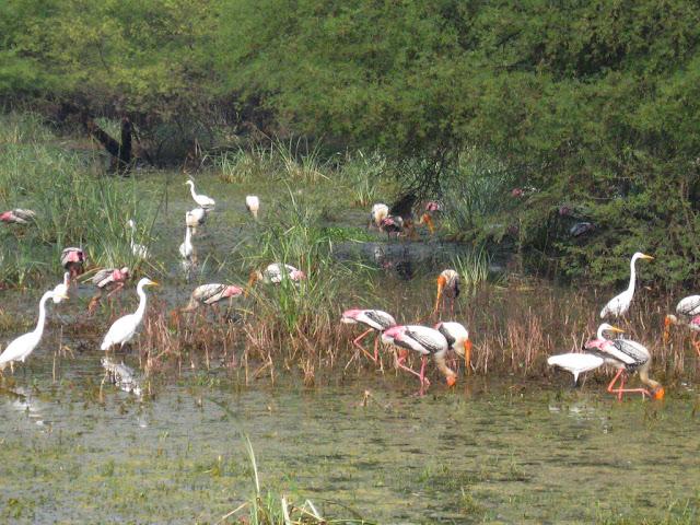 Bharatpur National Park and bird sanctuary