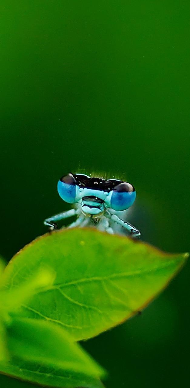 Dragonfly macro photo.