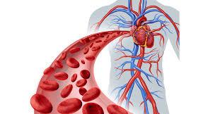 كرات الدم الحمراء