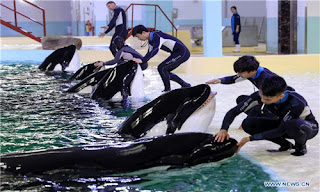 killer whale breeding facility