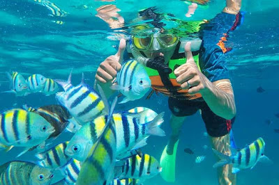 snorkeling dan diving