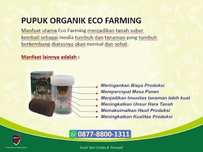 Manfaat Pupuk Eco Farming