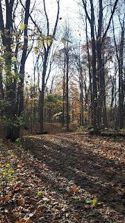 Sentier Parc de Bois-de-Liesse, automne, feuilles mortes, boucle des Érables noirs