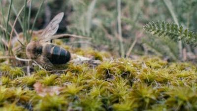 Εντυπωσιακο video: Πως ζευγαρωνουν οι μελισσες