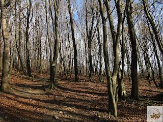 Nemal co kilka kroków las się zmienia