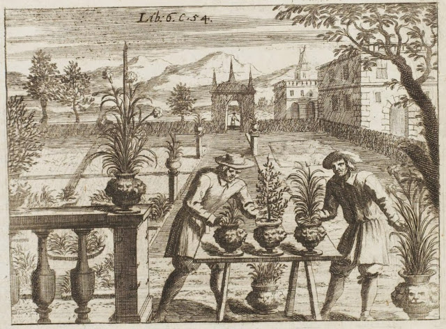17th century engraving - arranging pot plants in farm garden