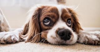 desifeccion del hogar con tu mascota