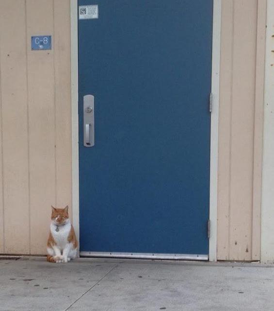 """Chú mèo được cấp thẻ học sinh do chăm... """"đến lớp"""""""