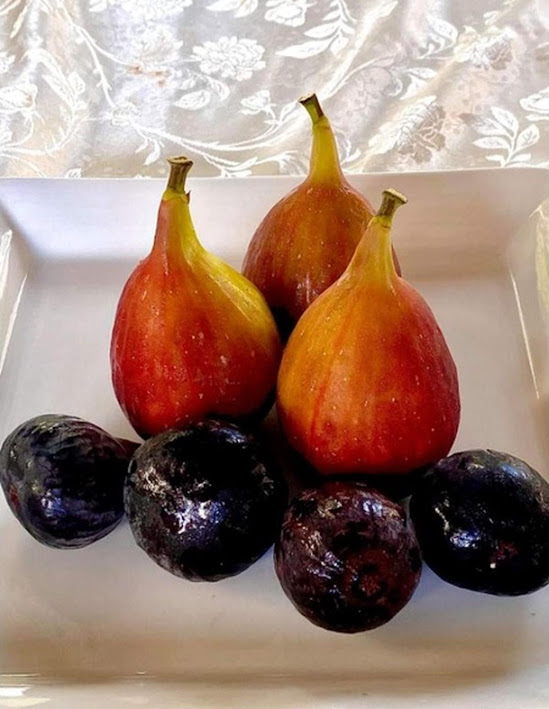 bibit buah tin fresh cangkok berbagai jenis Magelang