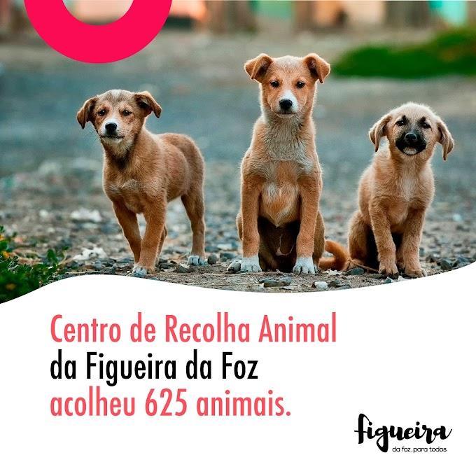 Centro de Recolha Animal da Figueira da Foz acolheu 625 animais em 2020