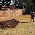 Viveiro municipal agora conta com compostagem de material orgânico