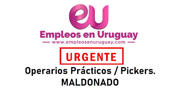 URGENTE Operarios Prácticos / Pickers. Departamento de Maldonado (Excluyente)