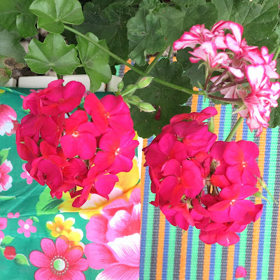 ByHaafner, pink pelargonium, flowers, bright, mat, plaid, urban garden