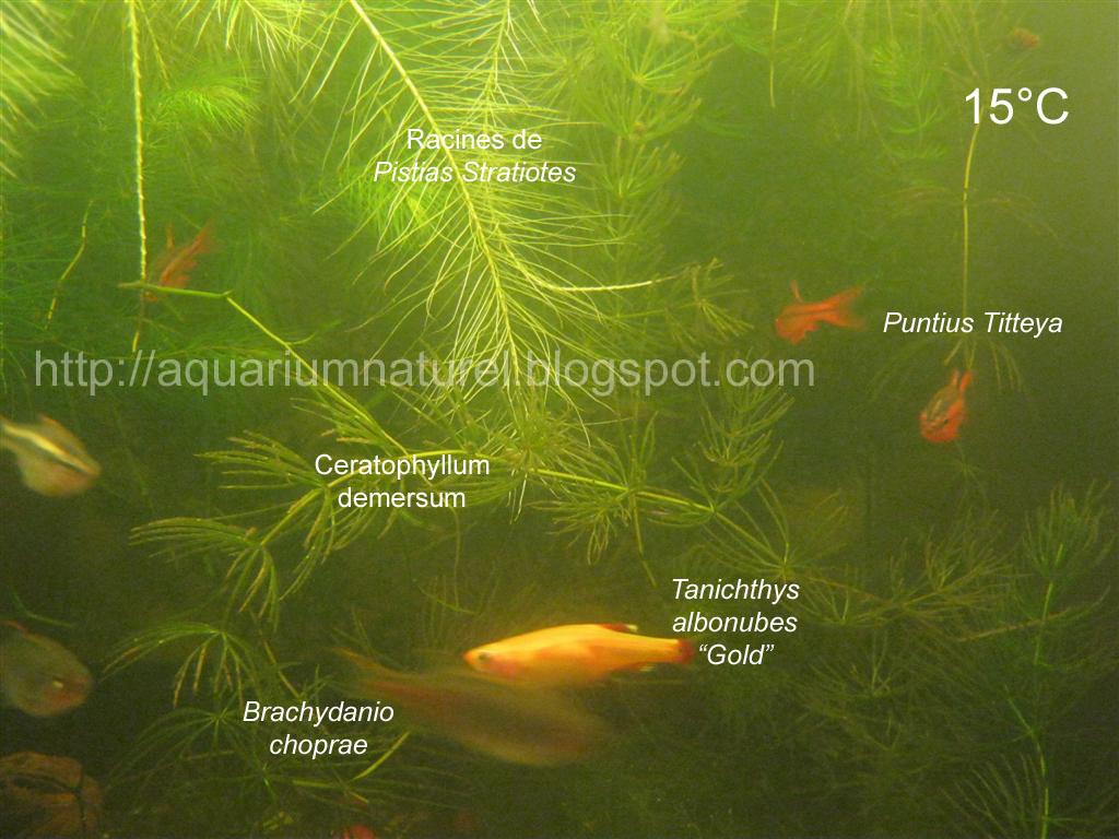 l 39 aquarium naturel aquarium sib rien non chauff. Black Bedroom Furniture Sets. Home Design Ideas