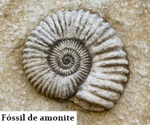 fossil-de-amonite-indagacao-ciencia