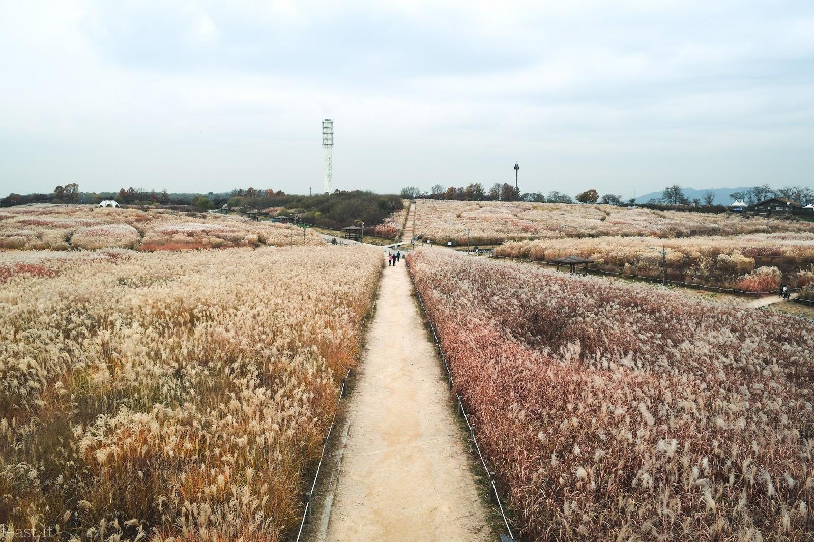 Kết quả hình ảnh cho Haneul Park