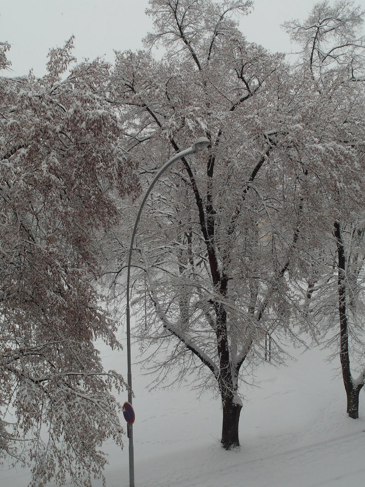 Zasněžený park v Prostějově