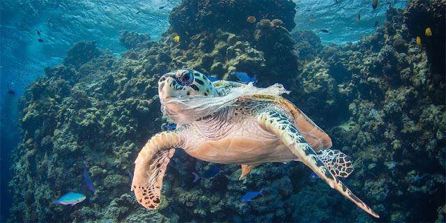 La polución por plástico en los océanos es fatal para la vida marina.Saeed Rashid