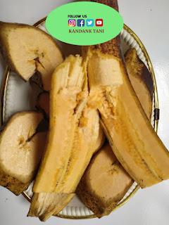 Jual pisang tanduk