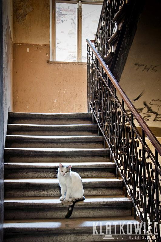 Przemyśl. Klatka schodowa z kotem.