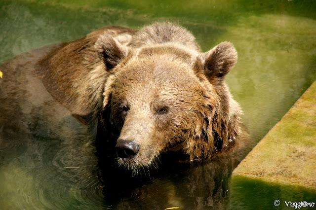 Uno dei tre orsi ospitati nella Fossa degli Orsi
