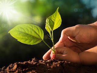 planting--danger