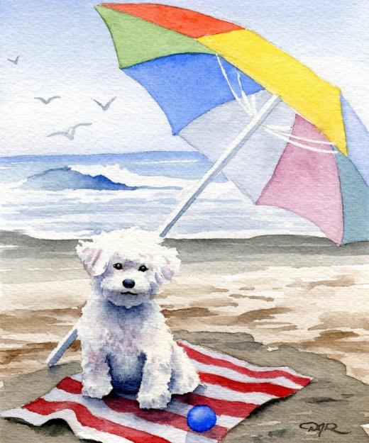 Cute Dog on Beach